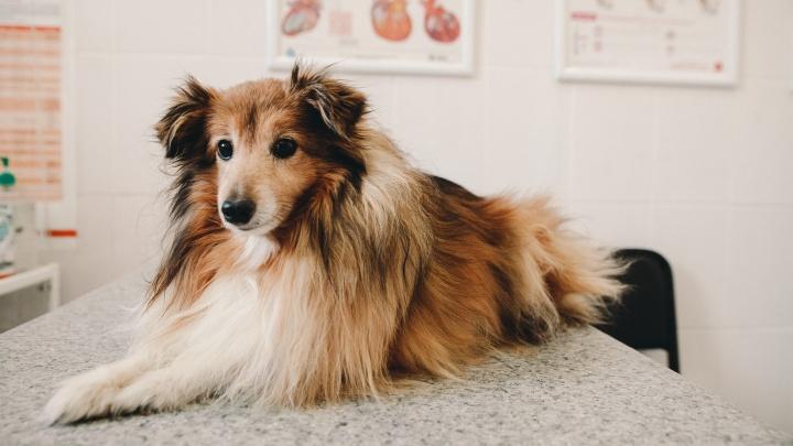 В Тюмени кошек и собак будут бесплатно тестировать на COVID-19