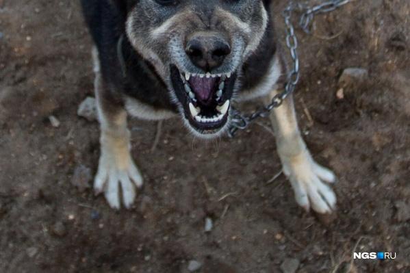 Как сообщают очевидцы, собака перепрыгнула через забор