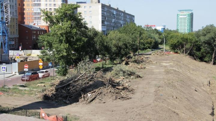 На берегу Оми посадили деревья, выкопали, а теперь планируют сажать новые