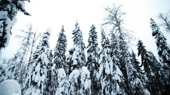Ответственное лесопользование: ГК«Титан» расширила площадь лесов, сертифицированных по FSC