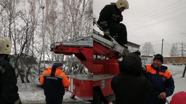 Спасатели сняли с дерева испуганного кота с помощью автовышки. Видео