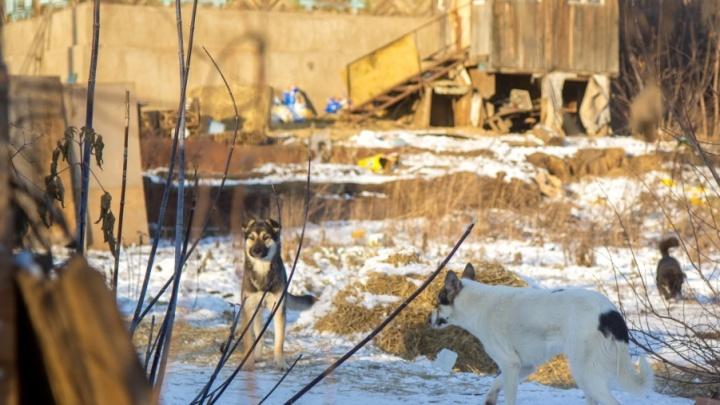 В Башкирии две собаки бойцовских пород загрызли парня