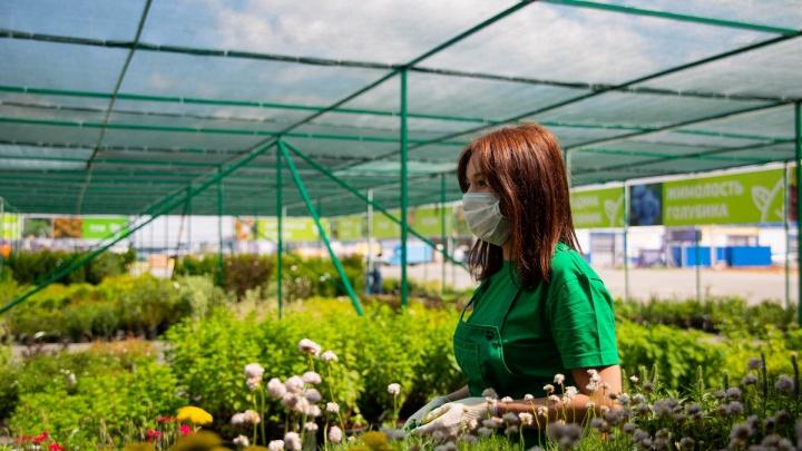 Это просто рай для дачников: в Челябинске открылся самый большой садовый центр в новом формате
