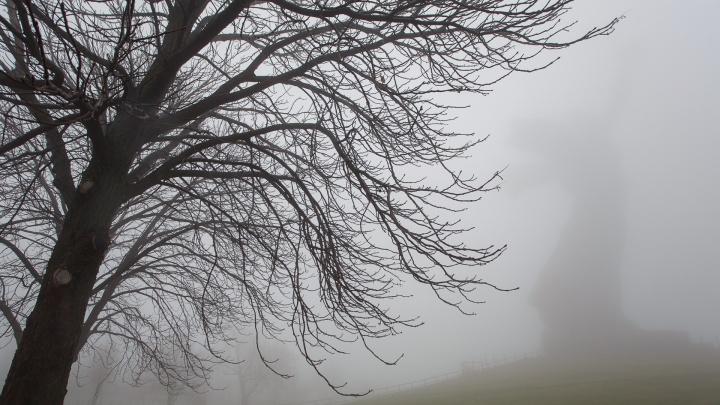 Температурные «качели» и снег вперемешку с дождем: Волгоград завершит ноябрь серой и унылой погодой