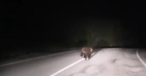 В Башкирии автолюбитель гнал по трассе медведя, есть видео