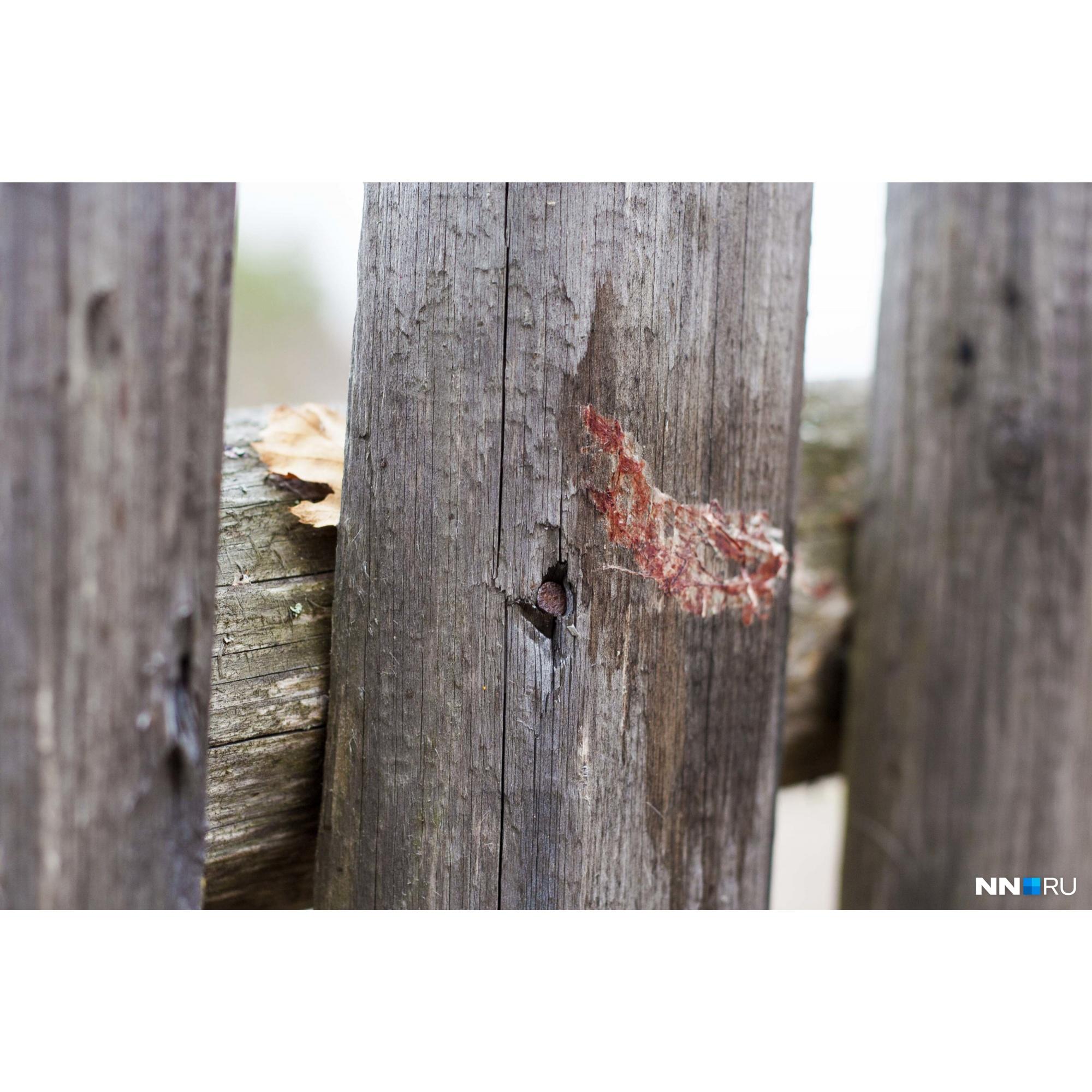 Кровь стрелка на заборе. Среди жителей ходят упорные слухи, что Даниил не кончал жизнь самоубийством, а был убит