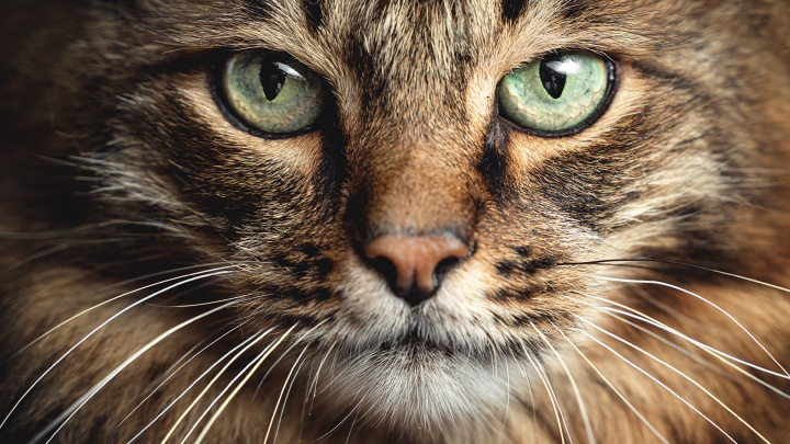 Смотрим в глаза челябинским котам, пережившим полёт из окна и предательство хозяев. Вы точно заплачете