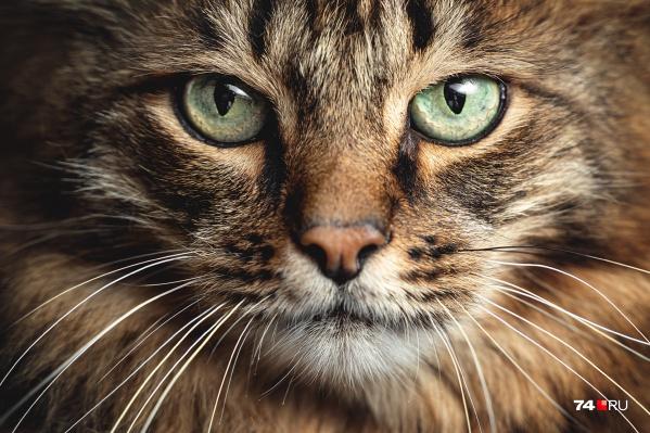 У котов, как и людей, бывает тяжёлый взгляд. И на то есть причины