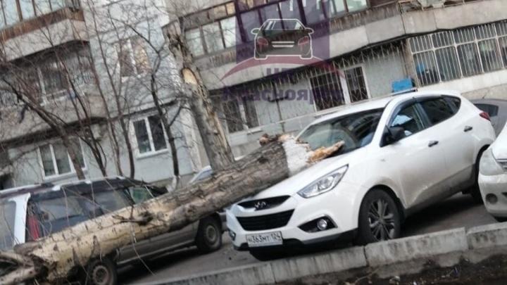 Падают заборы, крыши и деревья: в Красноярске ветер крушит все подряд