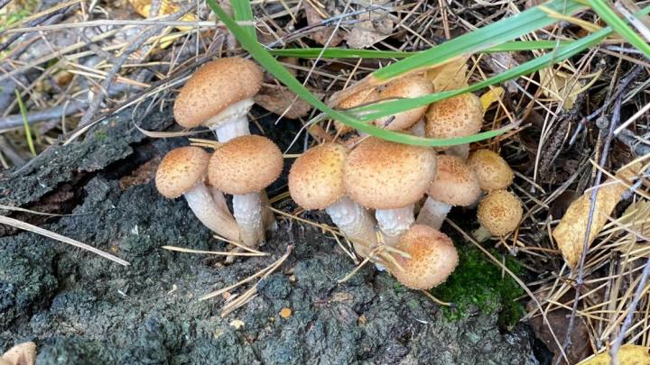 Забиты морозильники, закатаны десятки банок: грибное счастье в фотографиях от читателей E1.RU