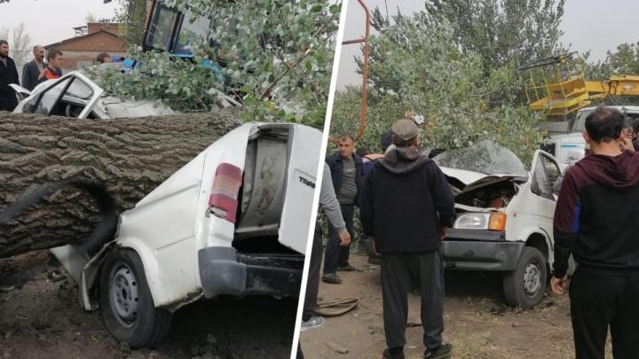 Ветер в Ростовской области обрушил дерево на иномарку. Двое погибли