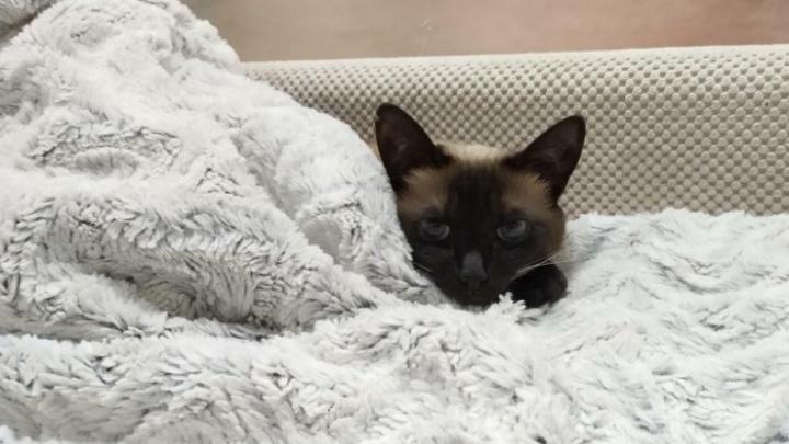 Лапки — под одеяло: ярославцы показали своих котиков, которые мёрзнут без отопления