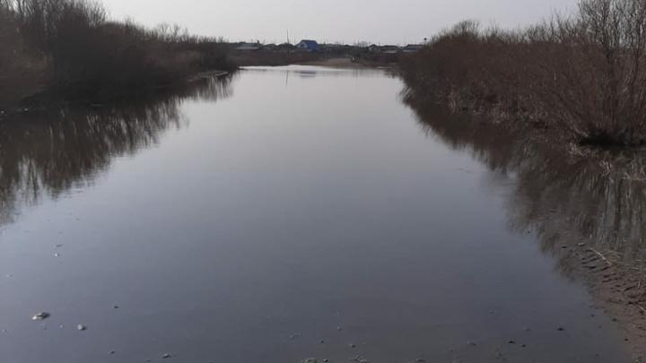 В Курганской области из-за паводка затопило дорогу в Целинном районе