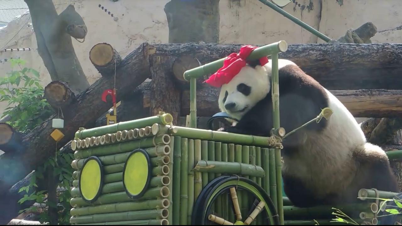 Кадр из видео Московского зоопарка