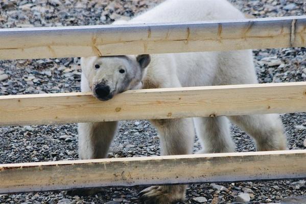 Медведи сами хотят залезть в кадр будущего фильма