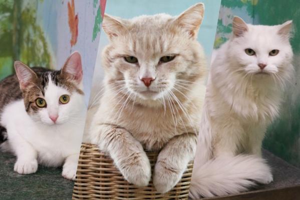 Характер у всех котов разный: у кого покладистый, у кого своенравный, у одних ласковый, у других игривый