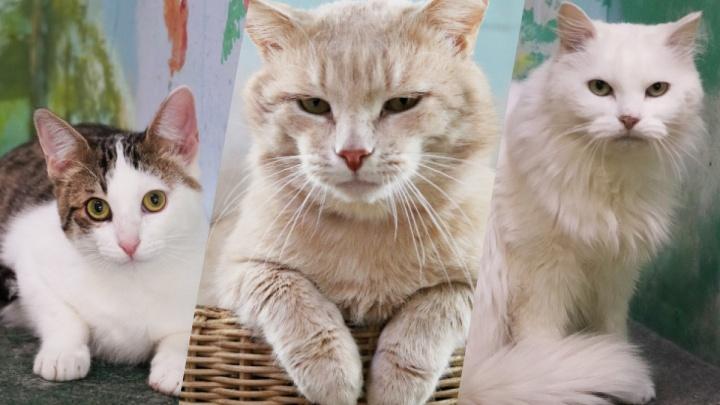 Без кота и жизнь не та: 8 пушистиков из нижегородского приюта ищут заботливых хозяев