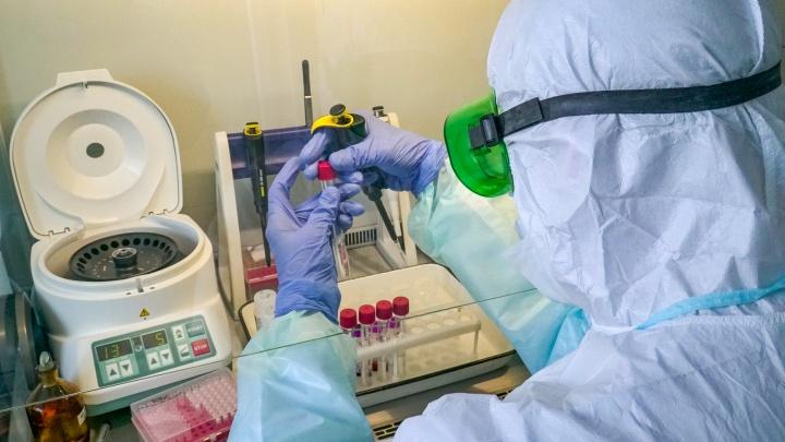 Все из-за Сальска: сразу 353 человека заразились коронавирусом в Ростовской области за сутки