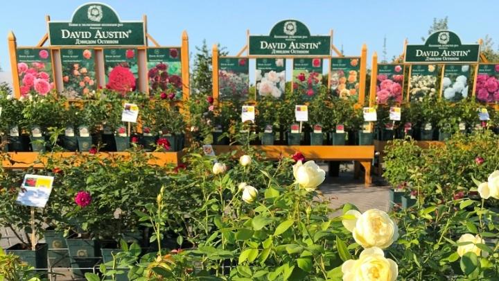 На дачи в полной готовности: Садовый центр «Астра» предложил тюменцам покупки в онлайн-магазине