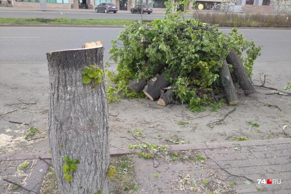Деревья вырубили вдоль всего проспекта Ленина