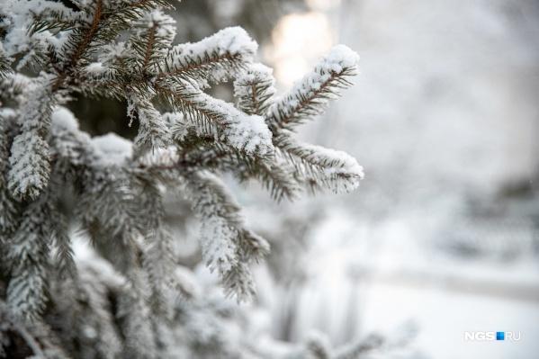 Вместе с потеплением в Новосибирск пришли снегопады и метели