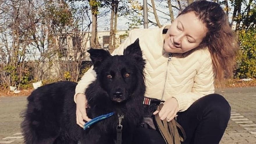 «Живет в Калифорнии и работает в Google»: истории волгоградских бездомных собак, сменивших улицу на заграницу