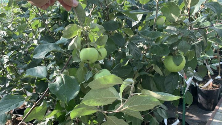 Для челябинских садоводов подоспела приятная новость