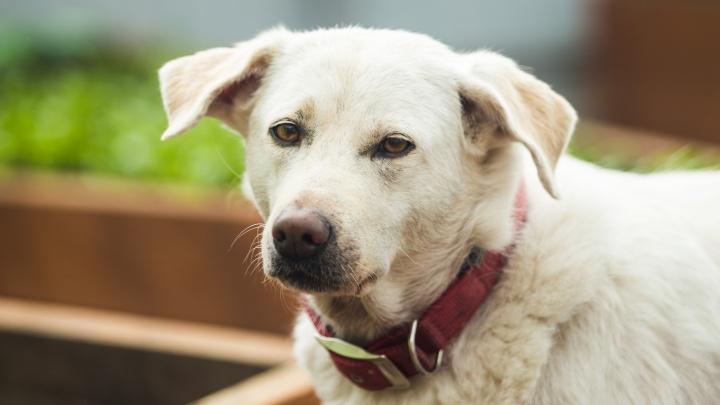 «Сначала собак, потом неугодного соседа убьет». Обсуждаем, кто и зачем травит животных в тихом центре