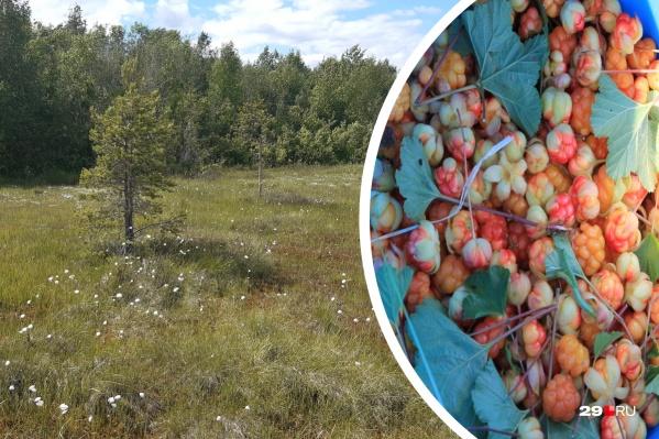 Ежедневно диспетчеры областной службы спасения выводят по телефону из леса по несколько северян, которые отправились туда по грибы или по ягоды