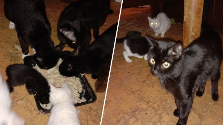 «На всех — два горшка»: после смерти хозяина в квартире остались 25 кошек. Их хотят выкинуть