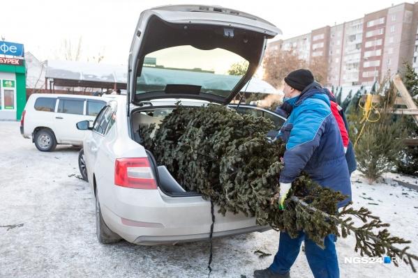 Хорошая елка не всегда влезает в машину
