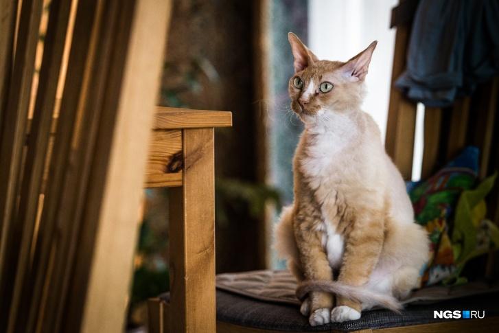 Дома у одних пациентов мы встретили такую кошку
