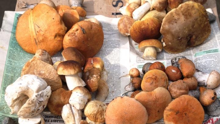 Правда ли, что уральские грибы могут вылечить рак? Отвечает эксперт