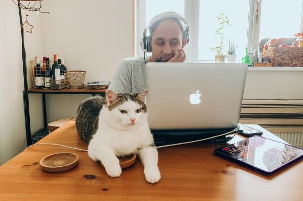Дома можно одновременно искать работу и гладить котика
