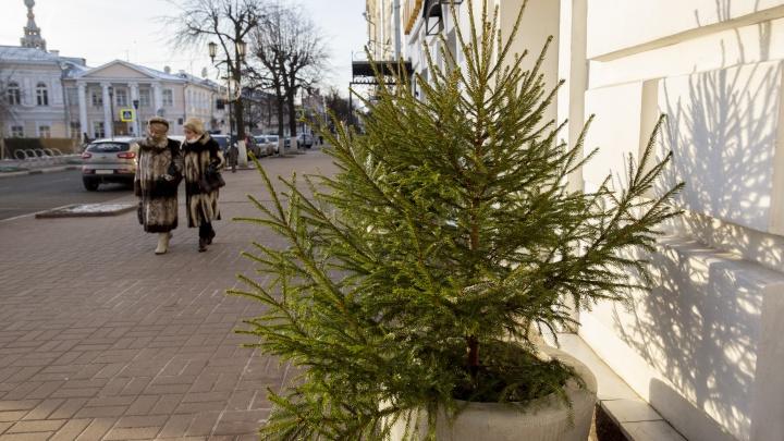 «Нас снова развели»: ярославцы пожалели, что проголосовали за выходной 31 декабря