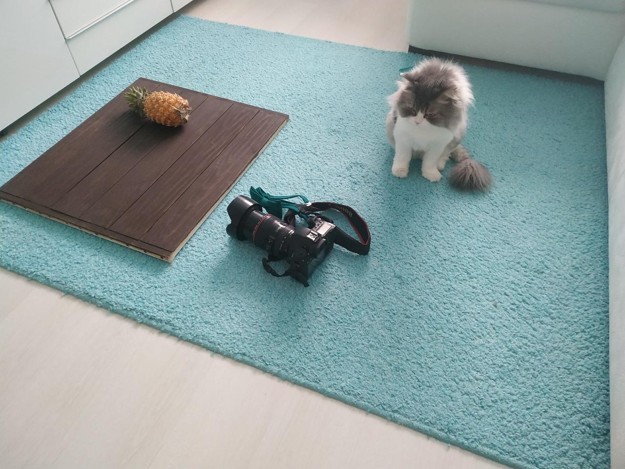 Кот Митя помогает нашей коллеге Марии с организацией фотосъёмки. И у него это, судя по всему, неплохо получается