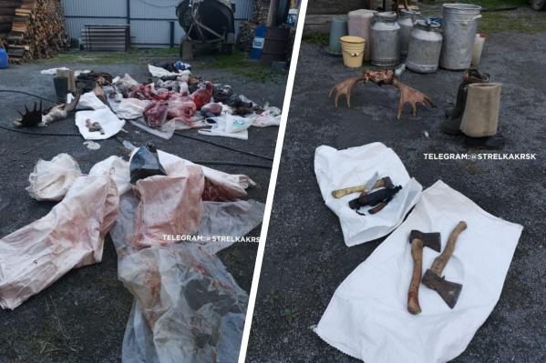 Туши незаконно убитых животных нашли на даче в Красноярском крае