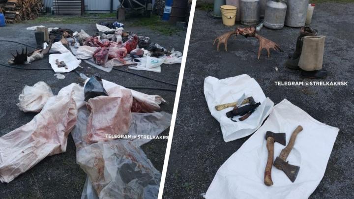 На даче брата чиновника Росрыболовства нашли туши незаконно убитых животных и краснокнижных осетров