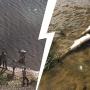 К берегу тюменского озера прибило много мертвой рыбы. Что случилось?