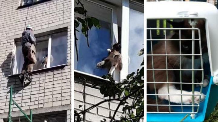 «Сдавило все внутренние органы, образовался тромб»: в Екатеринбурге из окна достали застрявшего кота