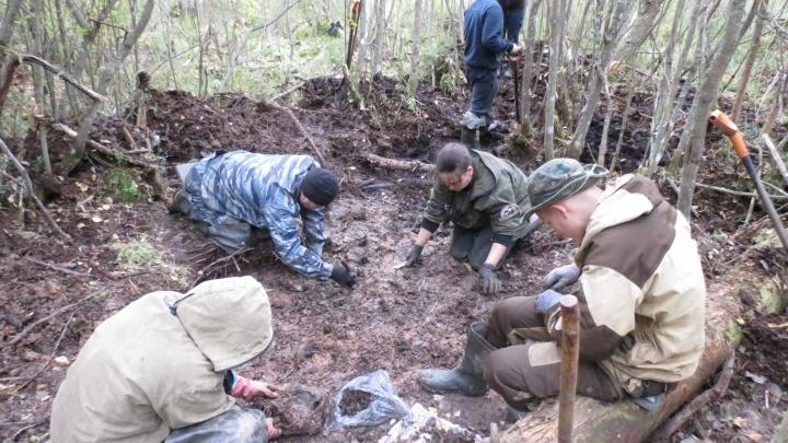 В Новгородской области нашли останки десяти омских солдат, погибших в Великую Отечественную