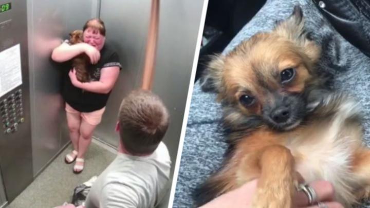Полиция возбудила уголовное дело против мужчины, жестоко избившего собаку на Латвийской