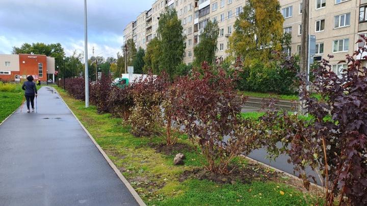 «Эгоизм и невоспитанность»: в парке «Зарусье» выкопали и унесли саженцы