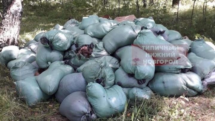 В правительстве сообщили, что останки животных на Южном обходе уберет ветнадзор