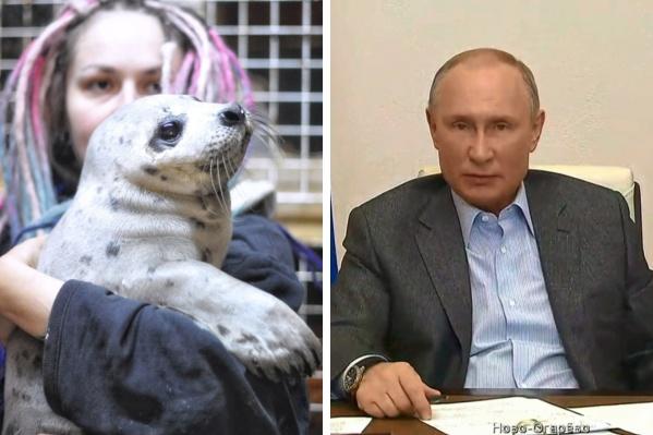 Победить в конкурсе на получение гранта волонтерам не удалось, но от создания Центра помощи тюленям они не отказываются
