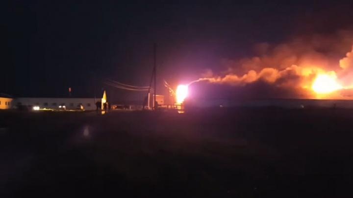 Из-за молнии в пожаре на тюменской ферме погибли 50 коров