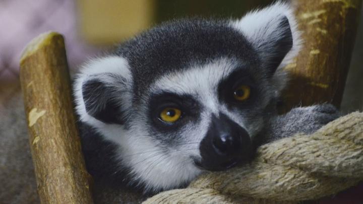 «Наслаждаются тишиной»: что делают животные Пермского зоопарка, когда к ним не ходят посетители