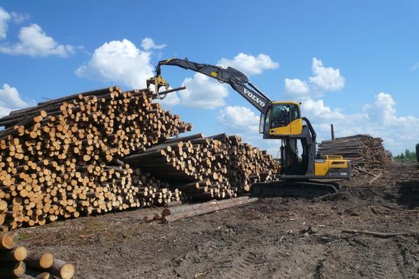 Лесопромышленники страны отметят профессиональный праздник 19 сентября