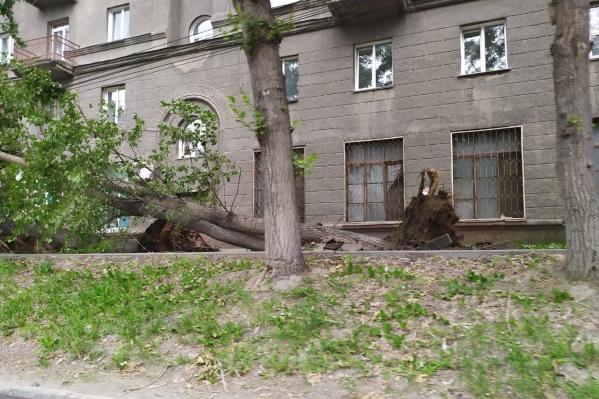 Деревья вырвало с корнем