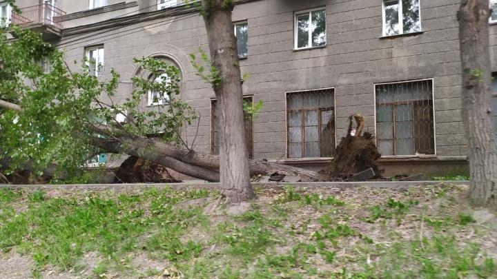 Вырвал с корнем деревья и снес крышу — смотрим, что натворил шквалистый ветер в Новосибирске